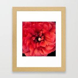 red spring flower Framed Art Print