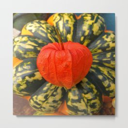 Chinese Lantern and Acorn Squash Metal Print