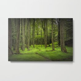 A Woodland Path in Cades Cove Metal Print