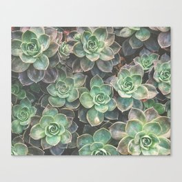 Succulents 2 Canvas Print