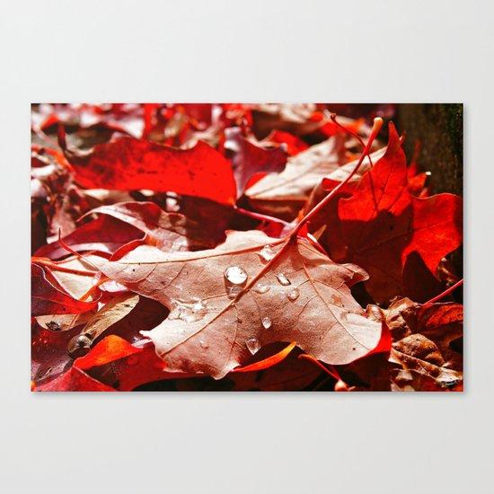 Autumn red Canvas Print
