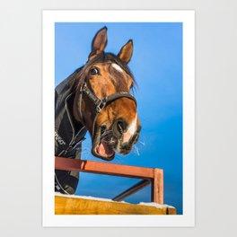 Laughing horse Art Print