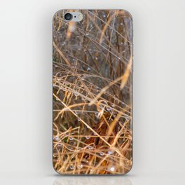 Dewdrops on grass iPhone Skin