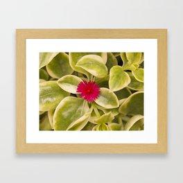 Lone red flower Framed Art Print