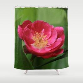 Floribunda Rose Shower Curtain