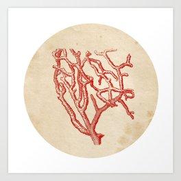 Red Coral Art Print