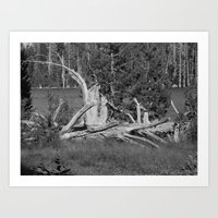 road trip, wood pile, snag by the lake Art Print