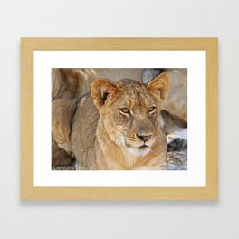 The Young One - Africa wildlife Framed Art Print
