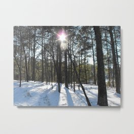Shining Sun Through the Snowy Pines Metal Print