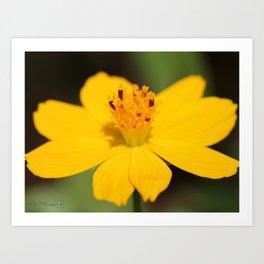 Cosmos Sulphureus named Ladybird Dwarf Lemon Art Print