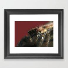Spider on Red Framed Art Print