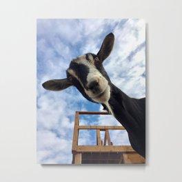 Stella the Goat Metal Print