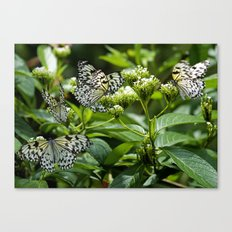 A Gathering of Nymphs Canvas Print