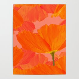 Beautiful Poppies Coral Color Background #decor #society6 #buyart Poster