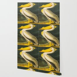 White Pelican John James Audubon Scientific Vintage Illustrations Of American Birds Wallpaper
