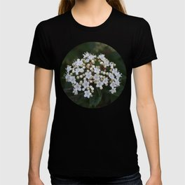 Viburnum tinus flowers and buds T-shirt