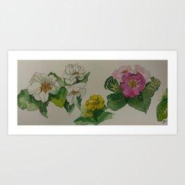 Spring Primula Art Print