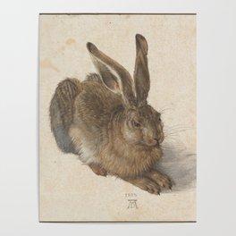 Hare by Albrecht Dürer Poster