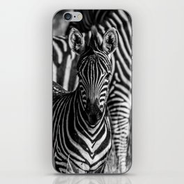 Zebras in Black and White iPhone Skin
