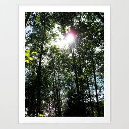 Afternoon Sun • Northpointe Fitness Park & Nature Trails • Marysville, WA Art Print
