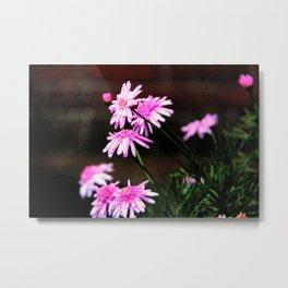 Summer Flowers Sans Metal Print
