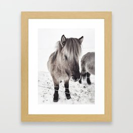 snowy Icelandic horse bw Framed Art Print