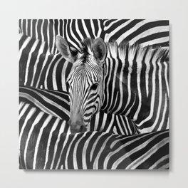 Modern Black And White Zebra Art Metal Print