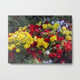 Begonias in Flower Metal Print
