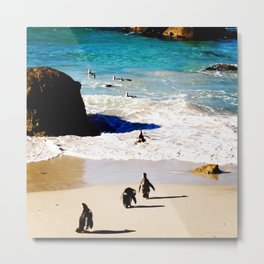 Boulders Beach Penguins Metal Print