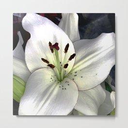 Fine Art Ivory Alabaster White Star Lily Close-Up Metal Print