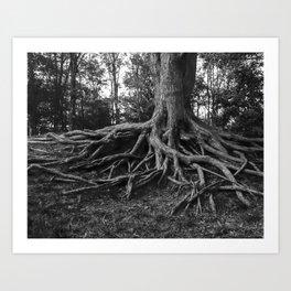 Putting Down Roots Art Print