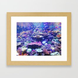 School Of Fish Framed Art Print