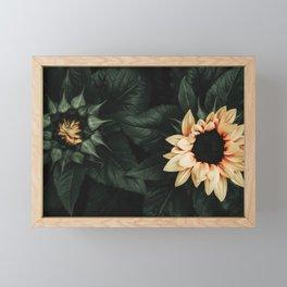 Sunflower Duo Framed Mini Art Print
