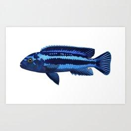 Malawi cichlids Pseudotropheus cyaneorhabdos female Art Print