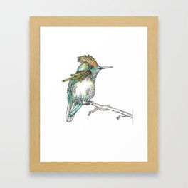 The Tufted Coquette Framed Art Print