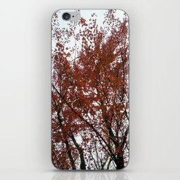 A tree in the fall. iPhone Skin