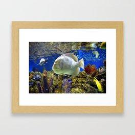 Nature Underwater Framed Art Print