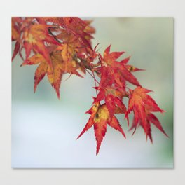 Fall leaves n.2 Canvas Print