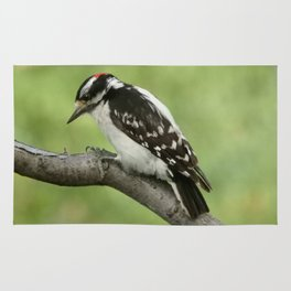 Downy Woodpecker Rug