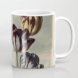 Reinagle, Philip (1749-1833)  - The Temple of Flora 1807 - Tulips Coffee Mug