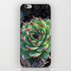 Sempervivum Succulents iPhone & iPod Skin