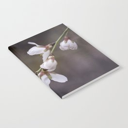 spring cherry blooms Notebook