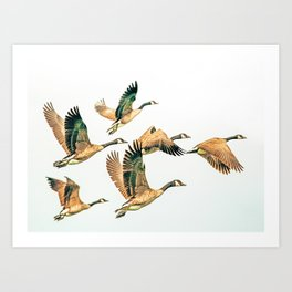 Fly Away || #photography #birds Art Print