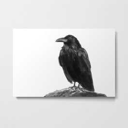 Illustration of a Carrion Crow. Digital painting. Metal Print