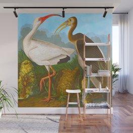 White Ibis John James Audubon Scientific Illustration Birds Of America Drawings Wall Mural