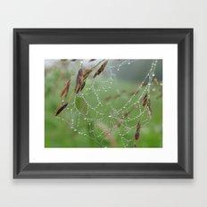USA - NASHVILLE - Spider Web Framed Art Print