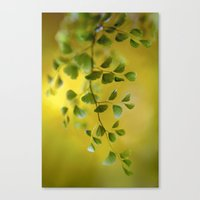 fern Canvas Prints featuring Fern by Mandy Disher