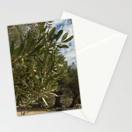 Olive Gardens of Lun with thousands years old olive trees, island of Pag. Stationery Cards