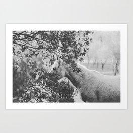 Horse II _ Photography Art Print