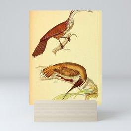 047 dendrocolaptes longirostris Scimitar billed Woodcreeper4 Mini Art Print